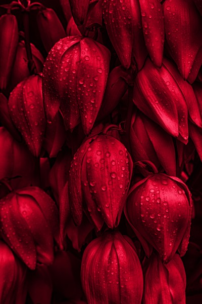 Rote Liebe