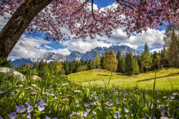 Kirschblüte am Wildensee