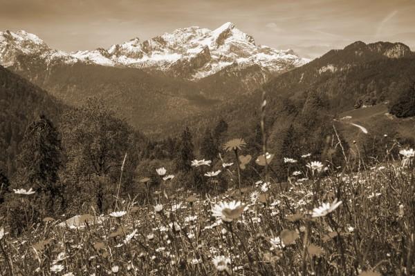 Alpspitzblick